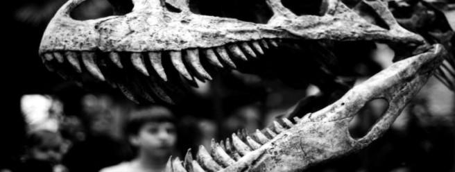 mass-fossil-dinosaur-792x300